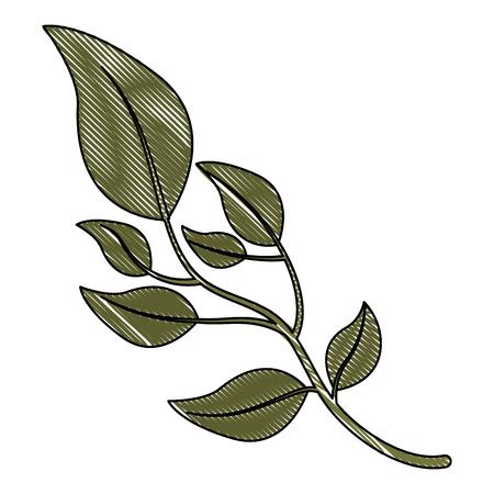 olive branch natural botanical image vector illustration drawing