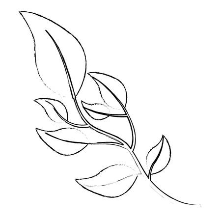 olive branch natural botanical image vector illustration sketch