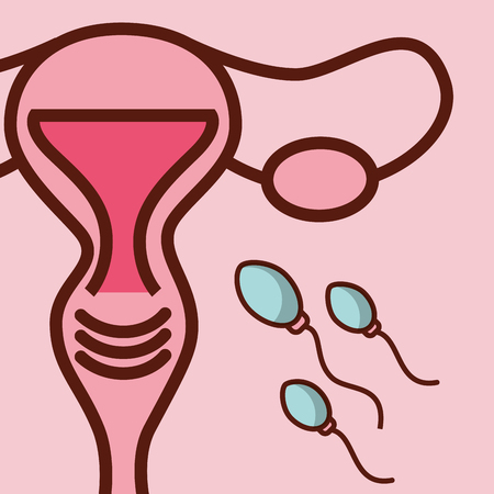 pregnancy fertilization female reproductive spermatozoon vector illustration