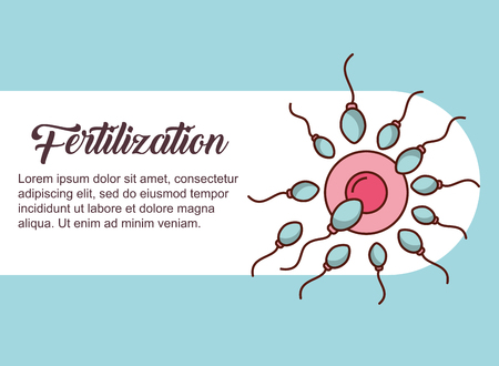 pregnancy fertilization ovum female many spermatozoon vector illustration Ilustração