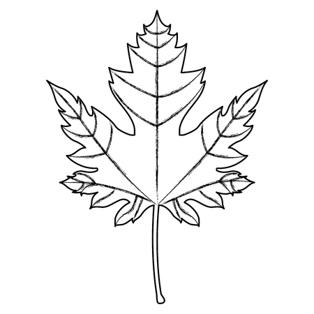 maple leaf canadian national symbol vector illustration