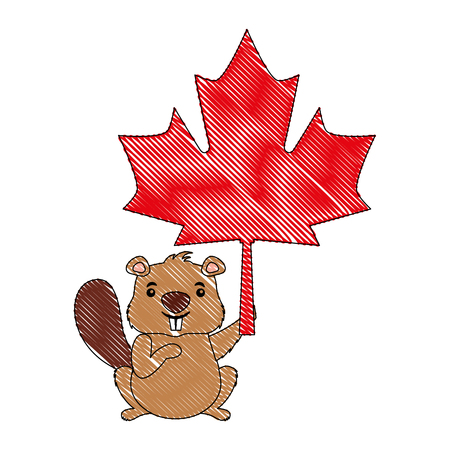 beaver of canada with maple leaf vector illustration design