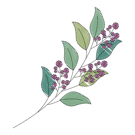 branch leaves berries fruit foliage vector illustration drawing Foto de archivo - 103706216