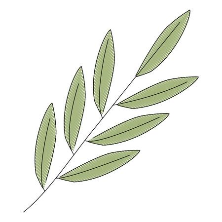branch foliage leaves natural botanical vector illustration drawing Illusztráció