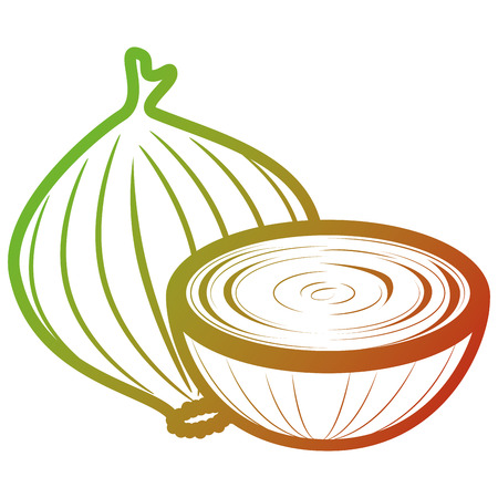 fresh onion vegetarian food vector illustration design 写真素材 - 104045872
