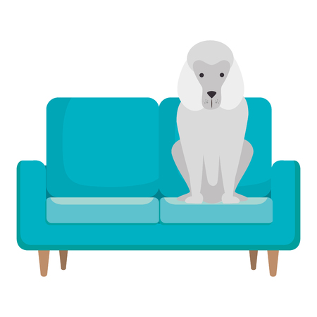 cute dog pet in the sofa character vector illustration design