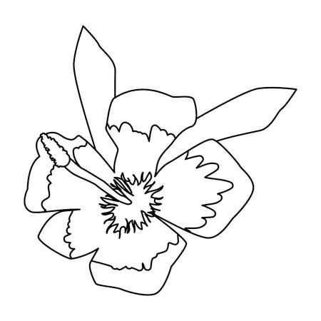 summer hibiscus flower exotic vector illustration design