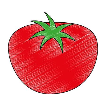 fresh tomato healthy food vector illustration design