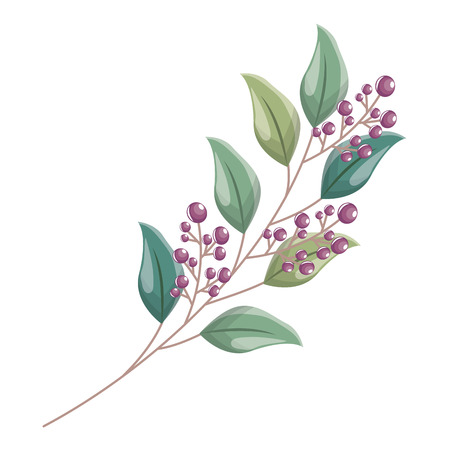 branch leaves berries fruit foliage vector illustration