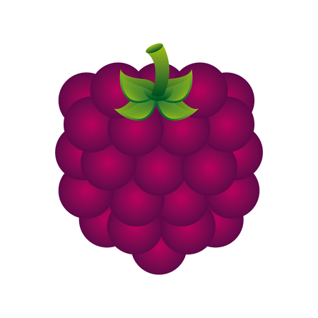 fruit design  over white background vector illustration Ilustração