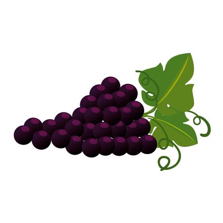 Grappolo di uva icona isolato illustrazione vettoriale design Vettoriali