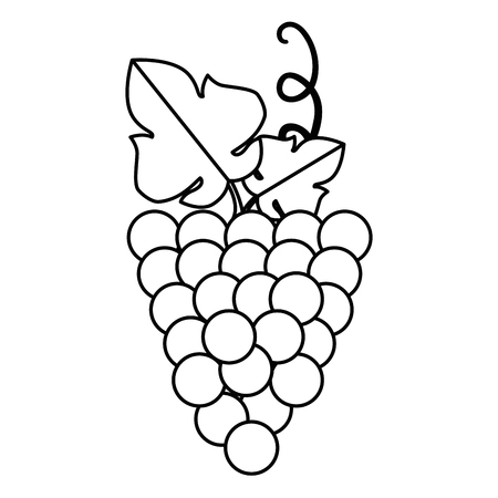 grapes cluster isolated icon vector illustration design