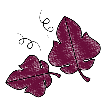 grape leafs isolated icon vector illustration design Illustration