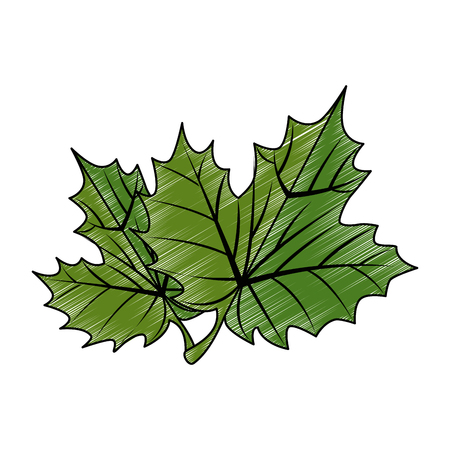 grape leafs isolated icon vector illustration design 向量圖像