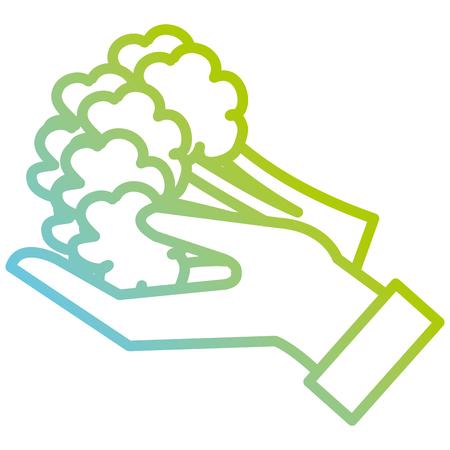 hand lifting fresh broccoli vector illustration design
