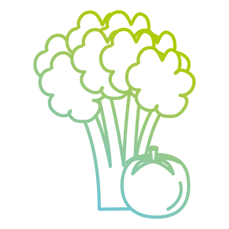 fresh tomato and broccoli vector illustration design