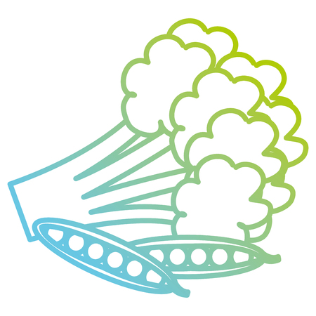 fresh broccoli with beans vector illustration design