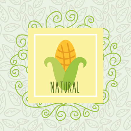 corn leaves background harvest food natural vector illustration