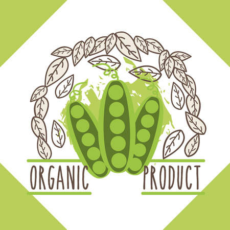 peas vegetable menu organic product brochure vector illustration 일러스트