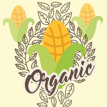 corn vegetable diet organic vintage card vector illustration