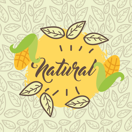 corn cobs organic harvest natural leaves background vector illustration