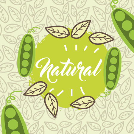 peas vegetable food fresh natural leaves vector illustration Illustration