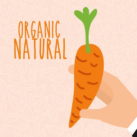 hand holding carrot vegetable fresh vector illustration