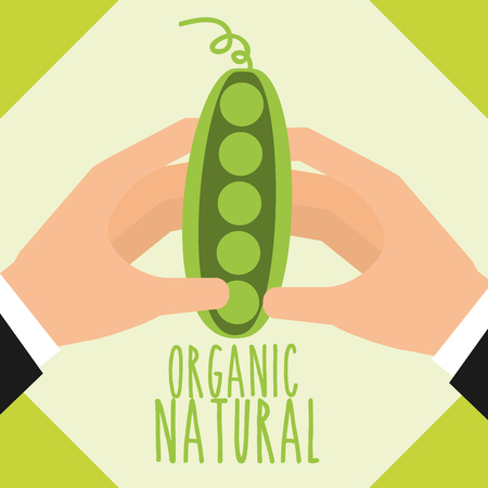 hands with peas vegetable organic natural vector illustration