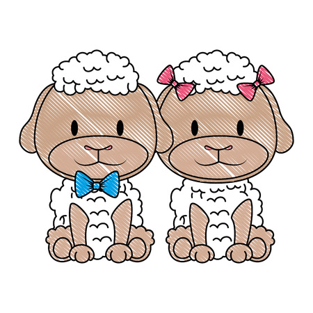 cute and adorable couple sheep characters vector illustration design