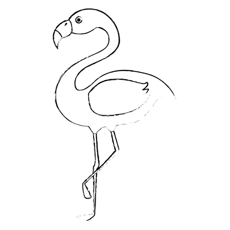 exotic bird flamingo natural vector illustration design