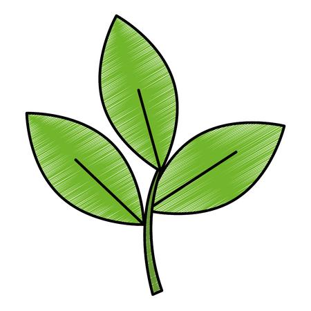 fresh leaf coriander healthy food vector illustration design