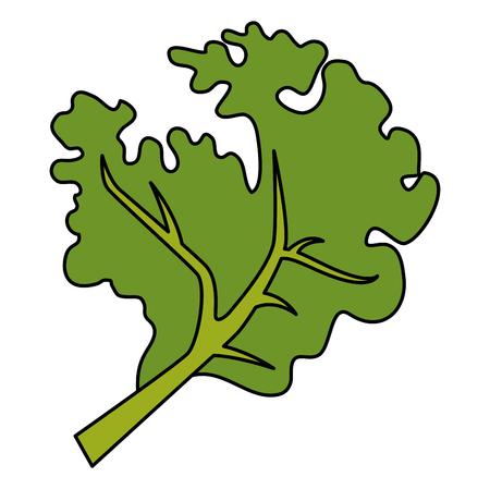 fresh lettuce healthy food vector illustration design