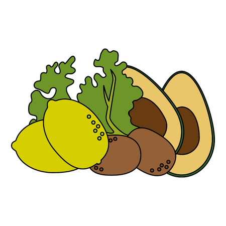 fresh lettuce with avocado and potatoes healthy food vector illustration