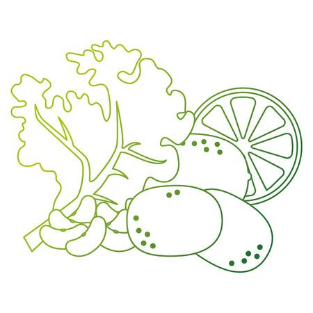 fresh lettuce with lemon and potatoes healthy food vector illustration design Illustration