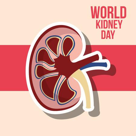 world kidney day human half organ vector illustration Stock Illustratie