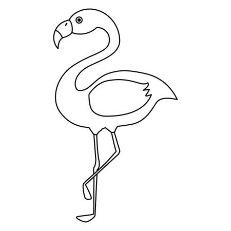 exotic bird flamingo natural vector illustration design