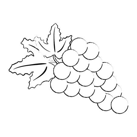 fresh grapes healthy food vector illustration design