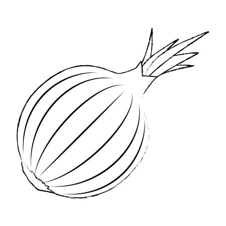 fresh onion vegetarian food vector illustration design 스톡 콘텐츠 - 111927871