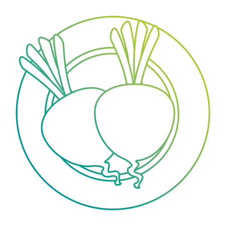 fresh beets in dish vegetarian food vector illustration design