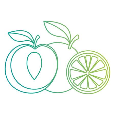 fresh peach and orange healthy food vector illustration design Illustration
