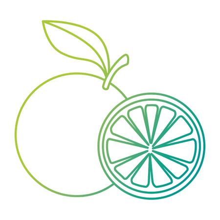 fresh oranges healthy food vector illustration design