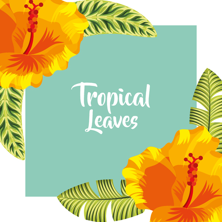 tropical leaves frame sign plants flowers color vector illustration Illustration