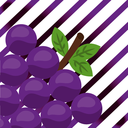 fruit fresh natural grapes stripes background vector illustration