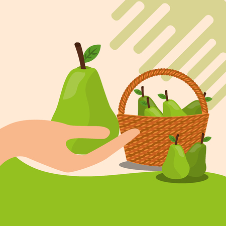 fruit fresh natural hand holding pear basket vector illustration