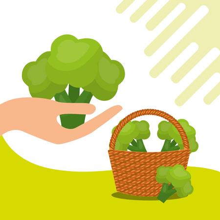 vegetables fresh natural broccoli basket vector illustration Illustration