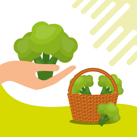 vegetables fresh natural broccoli basket vector illustration Stock Illustratie