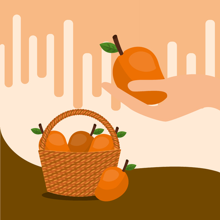 fruit fresh natural basket oranges vector illustration Иллюстрация