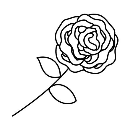 beautiful rose isolated icon vector illustration design