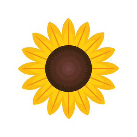 beautiful sunflower isolated icon vector illustration design