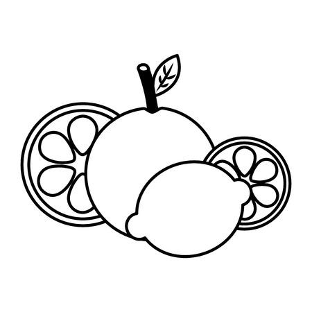 fruits fresh organic citrus orange lemon vector illustration outline
